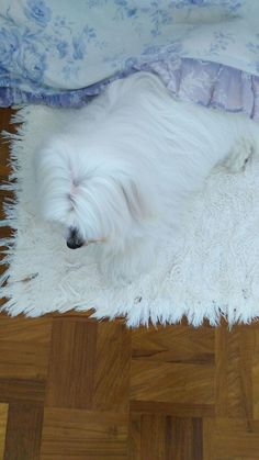 When your dog blends in with the rug http://ift.tt/2wqbdhx
