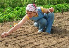 Sowing Seeds Directly In the Garden Easy Garden, Herb Garden, Vegetable Garden, Home And Garden, Gardening Vegetables, Little Gardens, Travel Humor, Wedding Art, Planting Seeds
