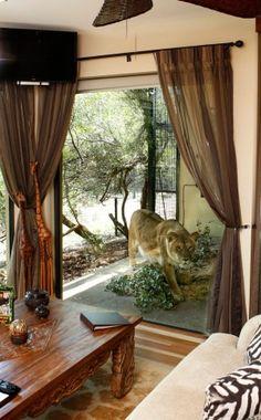 Jamala Wildlife Lodge, National Zoo, Canberra --- Waking up with the lions!