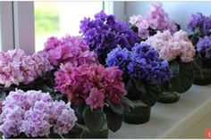 ciorapilor - Perfect Ask Little Flowers, Felt Flowers, Paper Flowers, Beautiful Flowers, Perennial Flowering Plants, Perennials, Indoor Flowers, Indoor Plants, Vegetable Garden