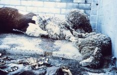Just seeing the typical dead-pile that animal auctions have is enough to disgust anyone with any sense of decency. Such disregard for life is a sin. Please go veg and stop paying others to do this for you.