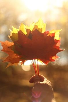 Seasons Of The Year, Four Seasons, Autumn Day, Autumn Leaves, Just Love, October Country, Halloween, Autumn Scenery, Tree Leaves