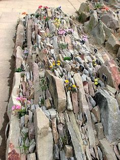 Example of a crevice garden which is something new to me and with so much slate around this is something else to try!
