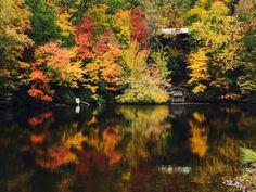 AL.com readers sent us some beautiful images of fall color from around the state.