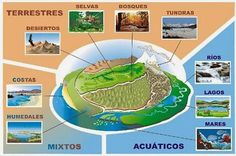 The different types of ecosystems Desert Ecosystem, Forest Ecosystem, Aquatic Ecosystem, Marine Ecosystem, Different Types Of Forests, Herbivorous Animals, Ecosystems Projects, Importance Of Water, Earth Surface