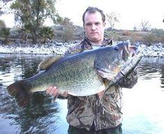 18 lb monster bass o