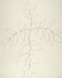 Ellsworth Kelly  American, born 1923, Branch of Leaves