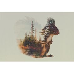 """East Urban Home 'Squirrel' by Andreas Lie Graphic Art on Wrapped Canvas Size: 12"""" H x 18"""" W x 0.75"""" D"""