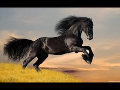 World's 10 Most Expensive Horse Breeds 1 - Arabian Horse 2 - Thoroughbred Horse 3 - Quarter Horse 4 - Paint Horse 5 - Mustang Horse 6 - Friesian Horse 7 - Ap. Most Beautiful Horses, Pretty Horses, Horse Love, Animals Beautiful, Beautiful Soul, Gorgeous Hair, Beautiful Creatures, Beautiful Images, Horse Wallpaper