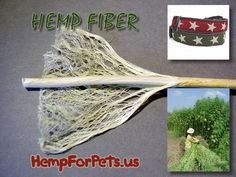 What is hemp fiber? An all-natural renewable reseource.