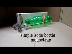 How to make ● a simple soda bottle humane mouse trap (that works!) - YouTube
