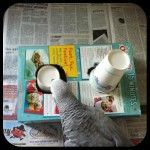 Box Cup Parrot Foraging Activity: Cut holes in a cereal box and place food, treats or bird seed inside. Once your pet is adept at the activity, set a paper cup in each hole for your bird to remove before accessing the food to increase the difficulty.