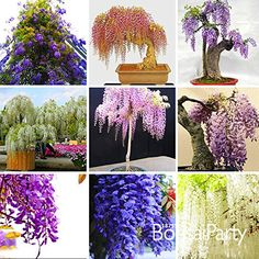11/15/2016 -- New Seeds 2015!Five Different Rare Mini Bonsai. Only $4.98! :)