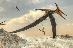Pteranodon bird flying above ocean Canvas Art - Elena DuvernayStocktrek Images x Reptiles, Mammals, Dinosaur Age, Thing 1, Science And Nature, Geology, Cuba, Beast, Creatures