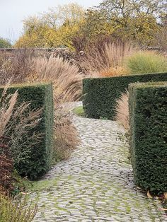Piet Oudolf garden - Bury Court great stone walk, ❤ the juxtaposition of clipped hedge with breezy grasses