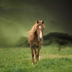 horse chestnut beautiful walking green glass