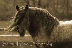 #western, #horses, #vintage,