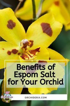 Orchid Plant Care, Orchid Cactus, Orchid Plants, Orchid Repotting, Cactus Flower, Indoor Orchids, Orchids Garden, Garden Plants, House Plants