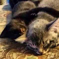 Brotherly love, foster kitten's Jan 2014