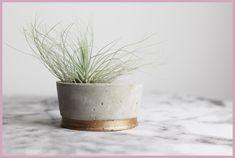Luftpflanzenhalter aus Beton selber machen mit frau friemel
