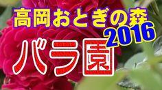 【散策物語】 高岡おとぎの森公園「バラ園」2016
