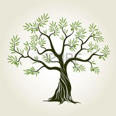 olive tree: Olive tree with leafs. Vector Illustration. Illustration