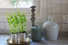 Grow your own pea shoots in the kitchen. Easy as pie You are in the right place about Microgreens p. Bra Hacks, Greens Recipe, Grow Your Own, Growing Plants, Second Hand, Garden Inspiration, Food Hacks, Indoor Plants, Home And Garden