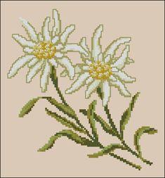 Esprit nordique-Edelweiss Little Flowers, White Flowers, Edelweiss, Cross Stitch Flowers, Applique Quilts, Close Image, Dahlia, Hand Lettering, Embroidery Designs