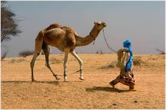 Man with Camel near Tombouctou, Mali  by Berth