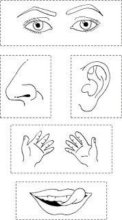 Els 5 sentits per a pintar Five Senses Preschool, 5 Senses Activities, My Five Senses, Preschool Activities, Preschool Worksheets, Preschool Crafts, Childhood Education, Kids Education, Body Parts Preschool