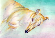 """""""Suzy"""" - watercolor Greyhound Art, Greyhounds, Whippet, Suzy, Dog Art, Art Pieces, Portraits, Watercolor, Pets"""