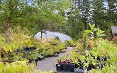 WSHG.NET | Glenwood Gardens — Exploring Plant Textures | Featured, For The Garden | June 5, 2014 | WestSound Home & Garden