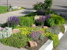 "A road edge planting.  Frequently called a ""hellstrip"" because it is a hot, dry and often difficult to grow in area.   This one is planted with 1. Yellow Ice Plant  2. Purple Salvia 3. Red, Dragons Blood Sedum and other drought tolerant plants.  Click image to get more ideas on Xeriscape Plantings"