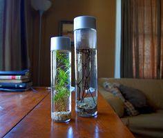 Paper Wings: aquarium jar. I feel if you painted the lid it would modernize it.