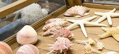 Sea Shells, Garlic, Cheese, Vegetables, Food, Clams, Veggies, Veggie Food, Shells