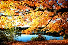 Image result for beautiful nature photography tumblr