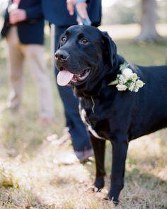 One Sweet Pup -  Jocelyn And Graham's Elegant Martha's Vineyard Wedding