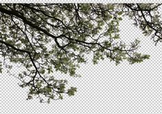view from The United Kingdom by Gobotree, including England, London, cutout plants, tree, blossom