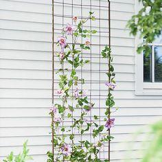 Jardin Flower Trellis to prop in front of broken window in blacksmith house on property.