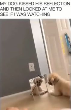 My dog kissed his reflection and then looked at me to see if I was watching – Leticia Rodriguez - Baby Animals Cute Funny Dogs, Funny Dog Memes, Funny Dog Videos, Cute Funny Animals, Dumb Dogs, Funny Kitties, Grumpy Cats, Cute Animal Memes, Cute Animal Videos