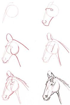 how to draw a horse's head -
