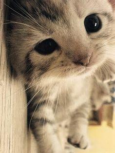 Cute : Kitten : Grey