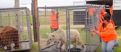 Bears Kept In Tiny Cages Run Free For The First Time In 20 Years