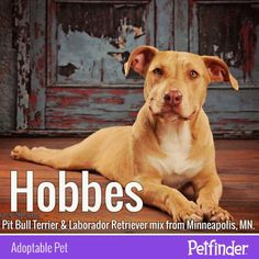 Cute. Housetrained. Playful. Loving. Need we say more? Hobbes is anxious to find his forever family!