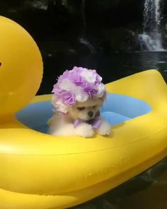 Our page related to pet and animals picture.We will provide you latest and cute pet and animals pictures stay with us and enjoy cute pets pictures Baby Animals Super Cute, Cute Baby Dogs, Cute Little Puppies, Cute Funny Dogs, Cute Dogs And Puppies, Cute Little Animals, Cute Funny Animals, Cute Cats, Doggies