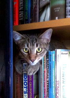 Books. Oh - and a cute cat!
