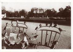 Jardin du Luxembourg Paris 1963, André KERTESZ