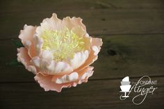 Peony by Fondant Flinger completed in Jacqueline Butler's Sugar Flower Course