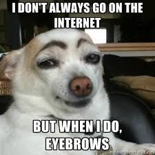 "apparently ""dogs with eyebrows"" is a thing."
