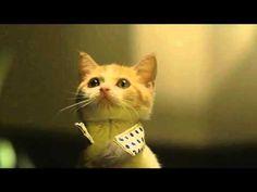 Cats Video.  Nya-NyaNya-!  #Cats